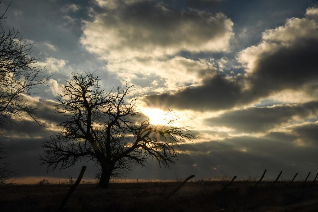 Sunburst and Tree by kareenking