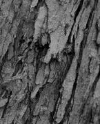 4th Feb 2019 - February 4: Tree Bark