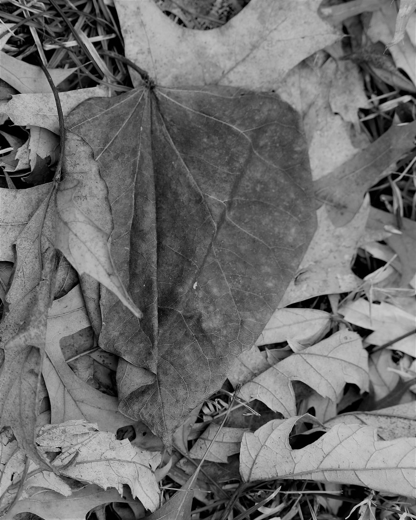 February 4: Leaf with Folds by daisymiller