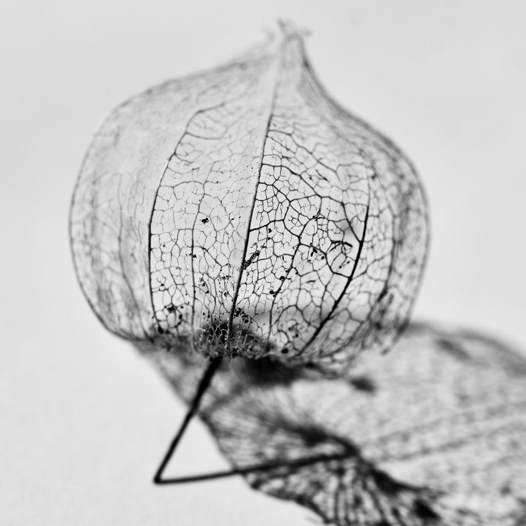 A Bit Of Texture.._DSC4660 by merrelyn