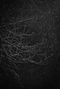 29th Jan 2019 - Snow Tree
