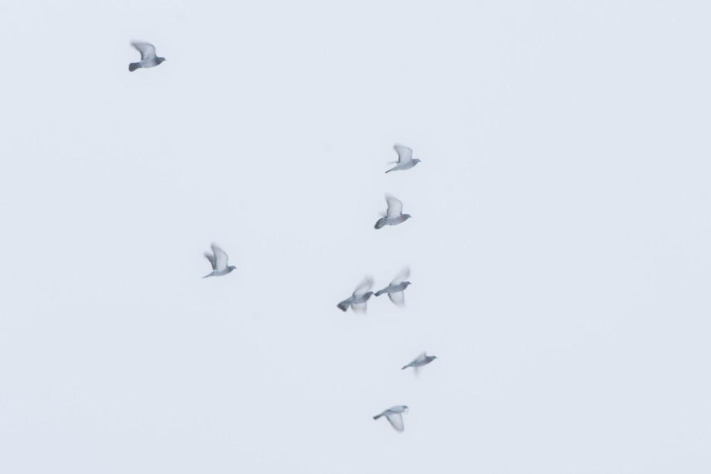Doves by farmreporter