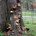 tree trunk and fungi (colour ) by beryl