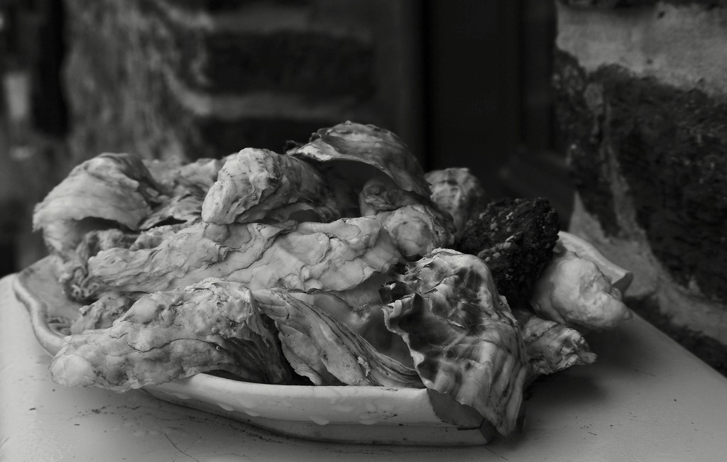 Texture & Pattern: 2 of 7, Weathered Oyster Shells by s4sayer