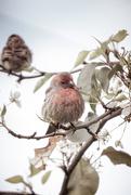 5th Feb 2019 - Fluffy Female Finch