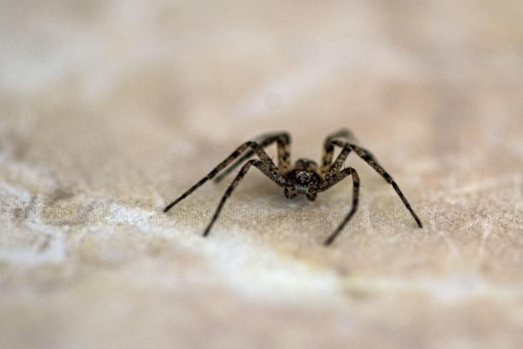 Itsy-bitsy Spider by farmreporter