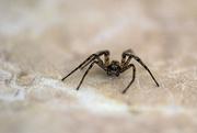 5th Feb 2019 - Itsy-bitsy Spider