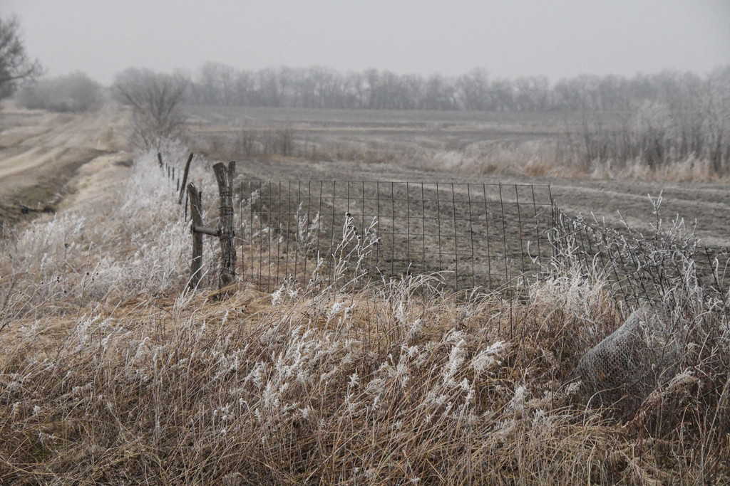 Frosty Fences by kareenking