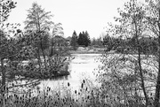 5th Feb 2019 - Ice Melt on the Pond
