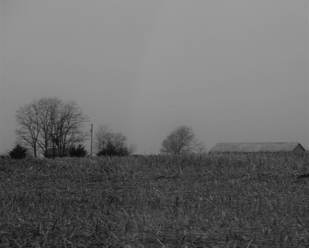 February 6: Corn Field in Winter by daisymiller