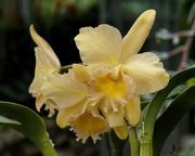 6th Feb 2019 - orchid