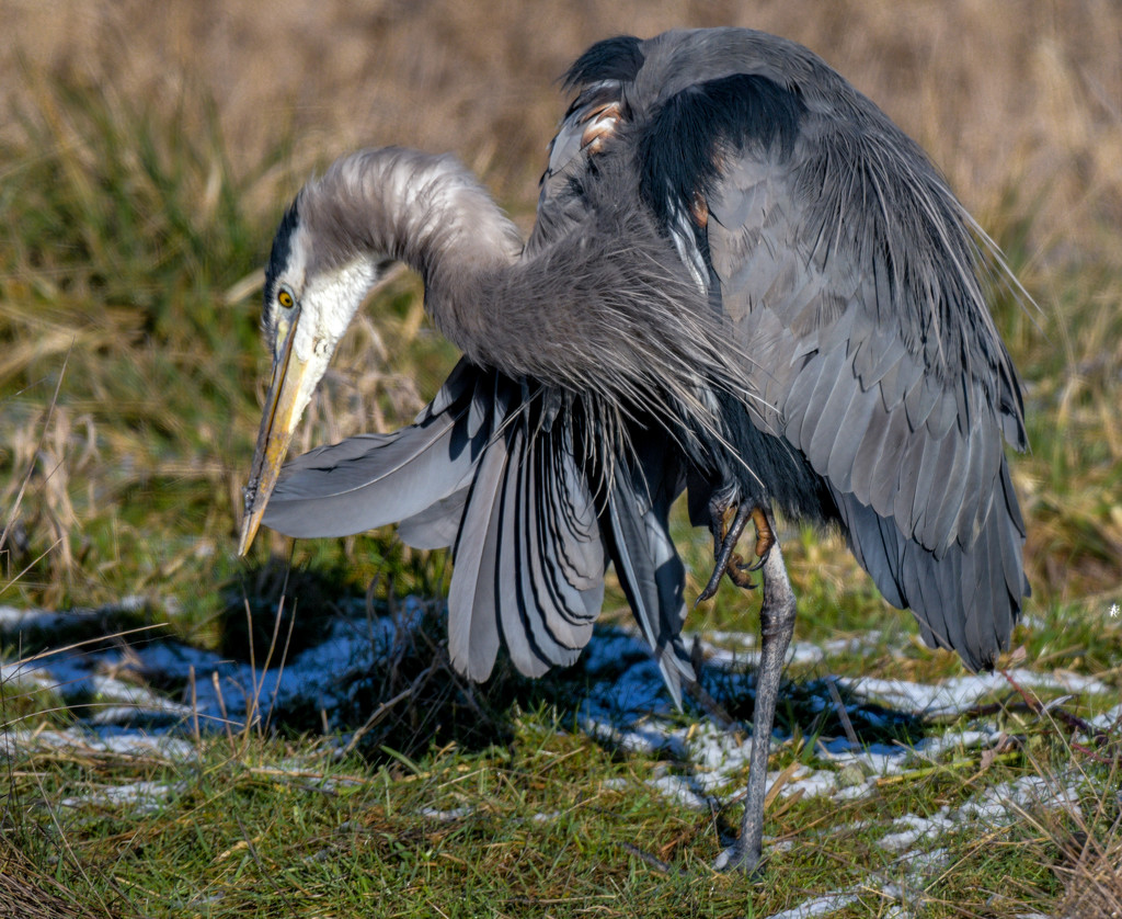 Just Preening My Feathers by stefneyhart