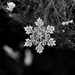 snowflake by aecasey