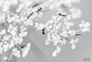 7th Feb 2019 - Ants