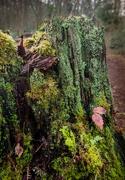 4th Feb 2019 - Green stump
