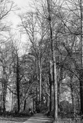 7th Feb 2019 - A Walk Through The Woods