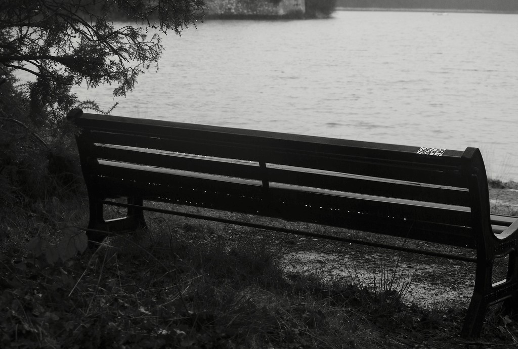 Texture & Pattern: 4 of 7, Lakeside Bench with Droplets by s4sayer