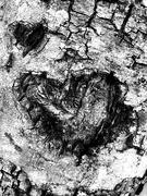 8th Feb 2019 - Carve me a heart