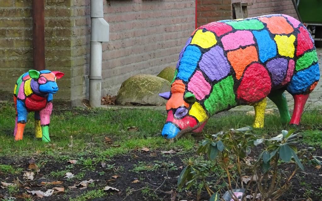 coloured sheep by gijsje