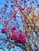 8th Feb 2019 - Candy tree.
