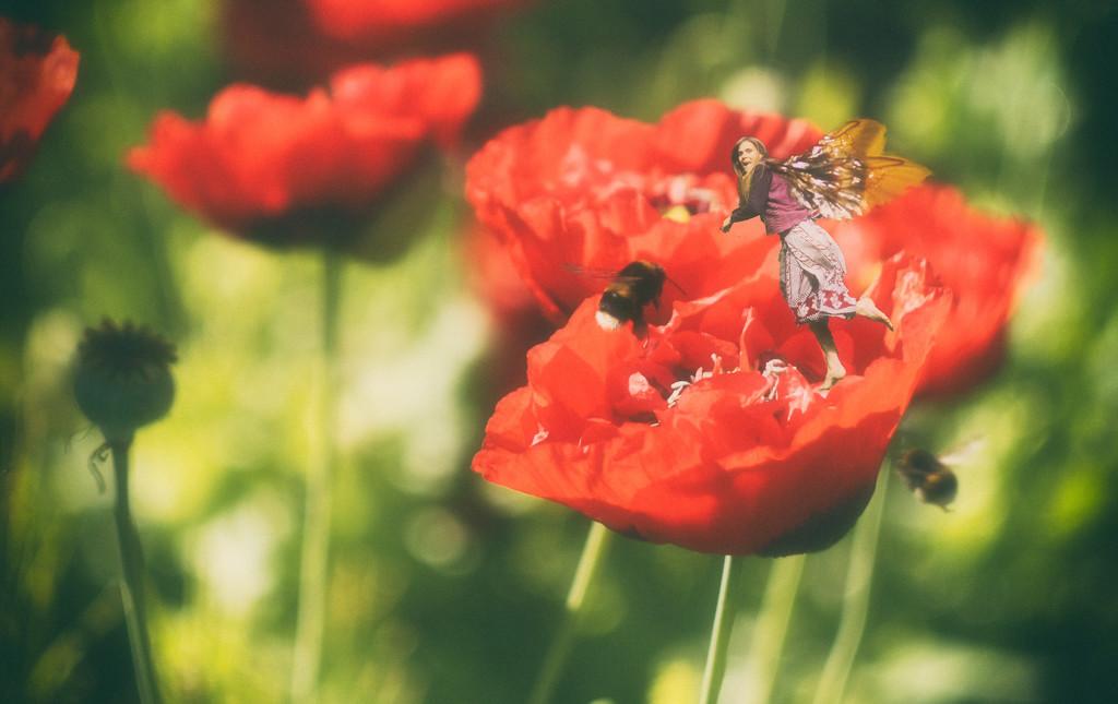 poppy buzzz by fiveplustwo