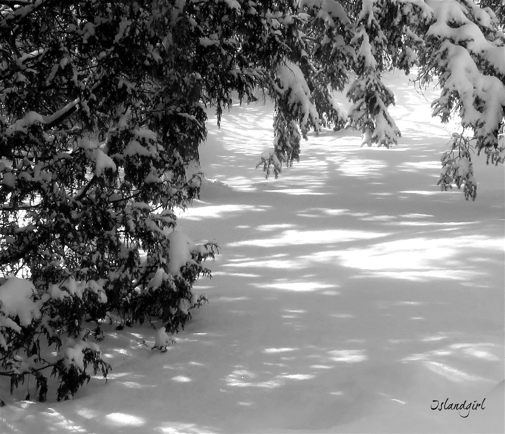 Patterns in the Snow  by radiogirl