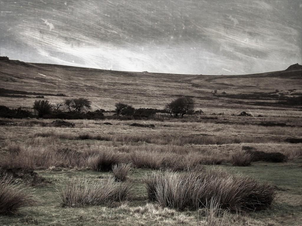 Moody Moor #1 by ajisaac