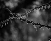 8th Feb 2019 - February 8: Ice Storm