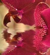 9th Feb 2019 - Orchids.....
