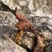 Rusty Ironwork