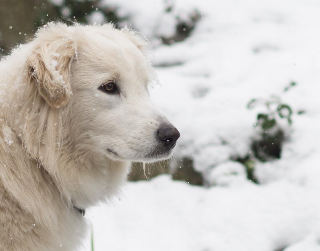 Snowy Sasha by epcello