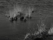 9th Feb 2019 - Texture & Pattern: 6 of 7, Reeds on Paimpont Lake