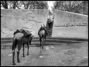 8th Feb 2019 - The Animals in War Monument in London