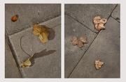 9th Feb 2019 - A London Study: Concrete pavement with dead leaves