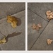 A London Study: Concrete pavement with dead leaves