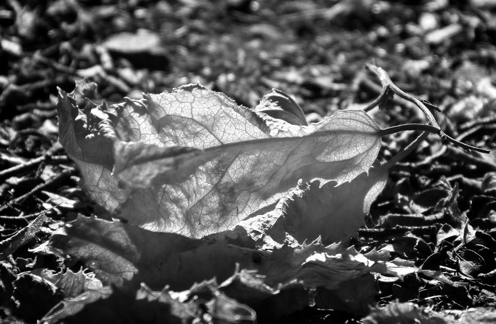 Leaf fall by kiwinanna