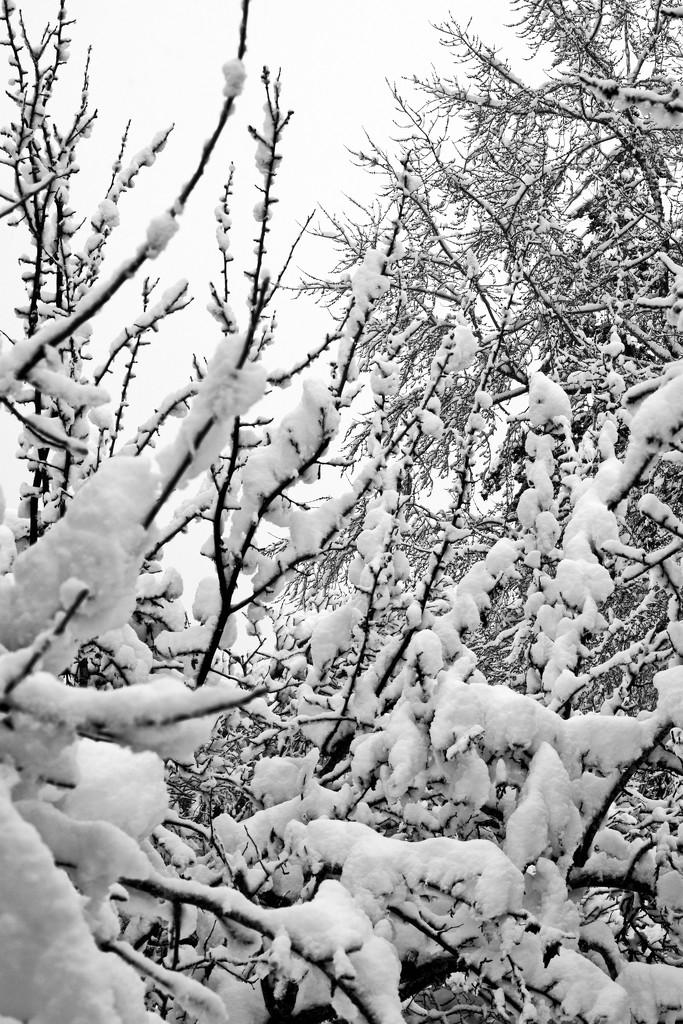 Heavy Snow by teriyakih