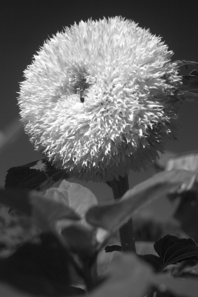 teddybear by kali66