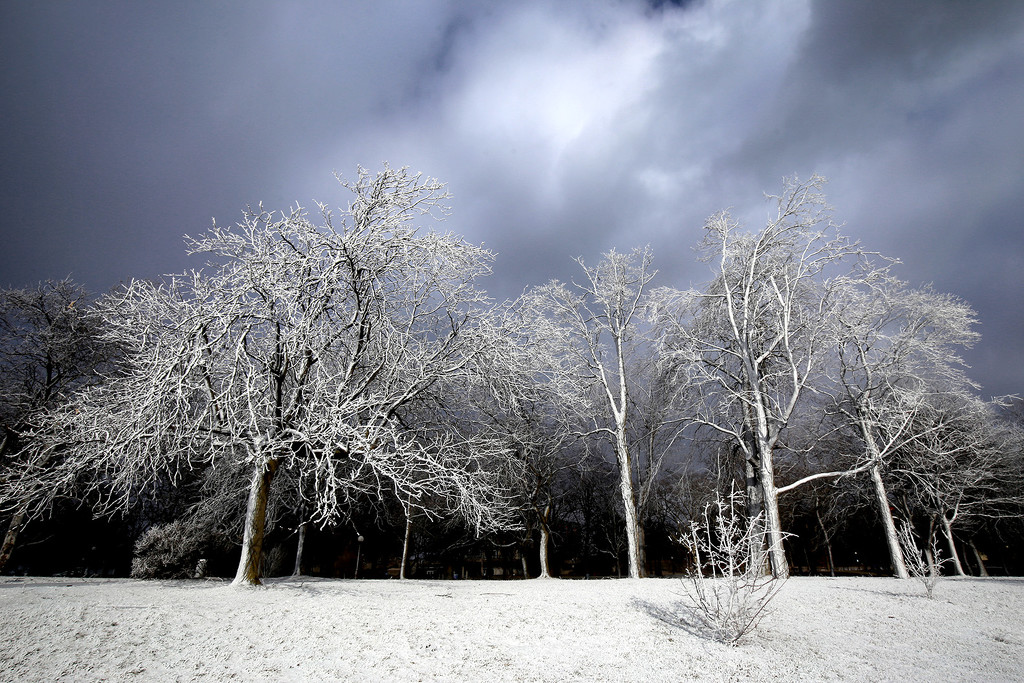 Celebration of Winter ...  by pdulis