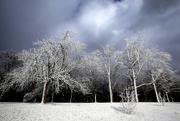 9th Feb 2019 - Celebration of Winter ...