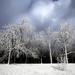 Celebration of Winter ...