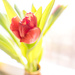 The first flower this year by haskar