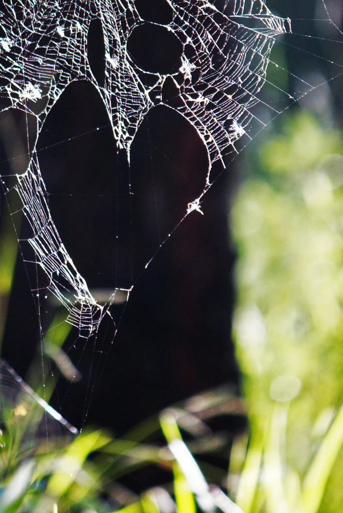 Hearty web by sugarmuser