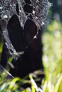 10th Feb 2019 - Hearty web