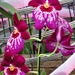Orchids  by beryl