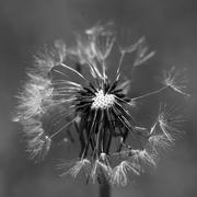 10th Feb 2019 - Make A Wish.._DSC4721