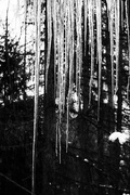 10th Feb 2019 - icicles from my window