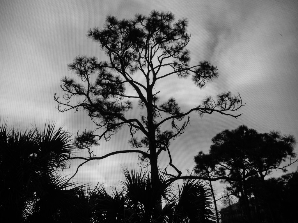 Tree in black and white by christinemgrote