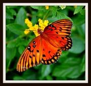 6th Jan 2011 - Not a Blue Butterfly