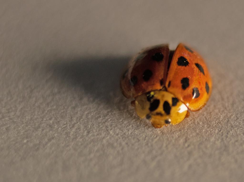 Lady Bug by tdaug80